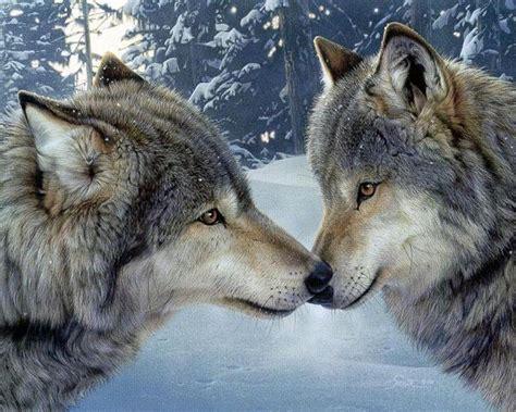 imagenes de animales lobos fonditos pacto de lobos 2d animales dibujos
