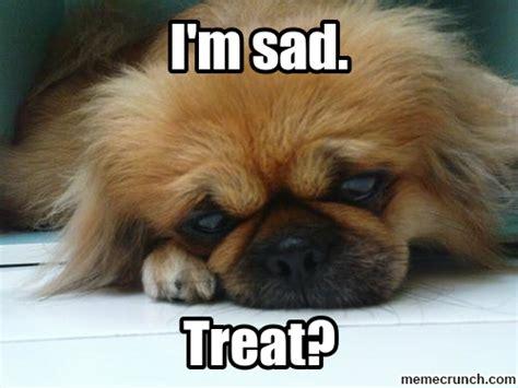 cute puppy memes memes