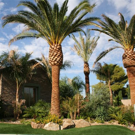 Tropical oasis landscape with palm trees in las vegas swimming pool builders byrneseyeview com