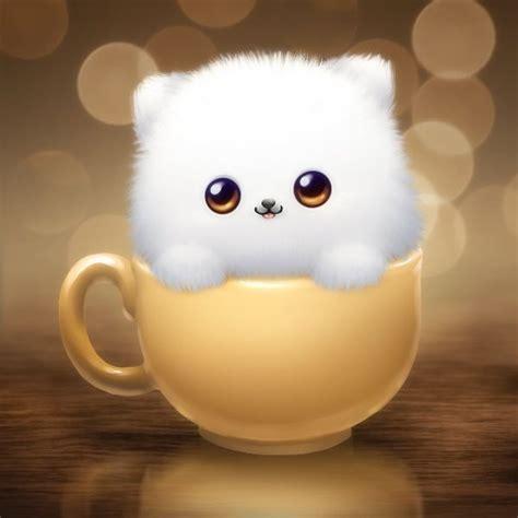 pomeranian teacup for sale in lebanon 48 best tea cup pomeranian and pomeranian d images on animals