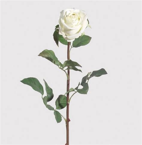 Multi Coloured Kitchen Accessories - white rose stem