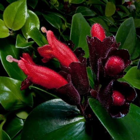 lipstick plant you make my heart pinterest