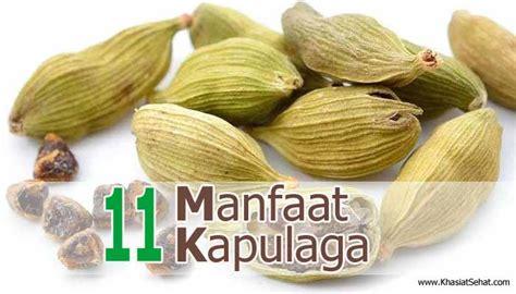 Minyak Atsiri Kapulaga 11 manfaat kapulaga bagi kesehatan efek singnya
