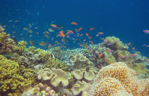 into the blue underwater sounds of nature for relaxation scuba diving stress relief underwater healing chr