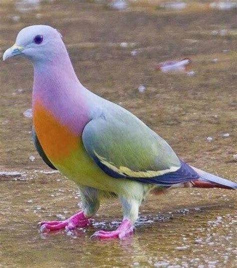 imagenes bonitas mas recientes el ranking de las 10 palomas m 225 s bonitas del mundo