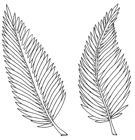 Free Printable Palm Leaves | free coloring pages of palm leaf