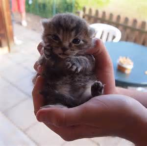 An awesome collection of cute kittens to ease the monday pains ned