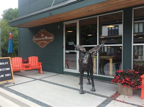 harbour chocolate lounge 171 no the chocolate moose bar harbor me top tips before you