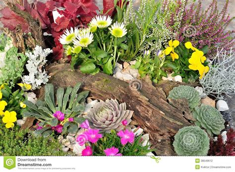 variety of flowers for garden variety of colorful flowers stock photography image