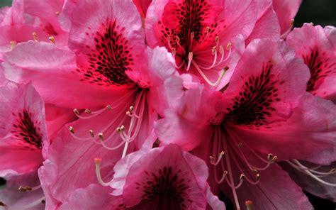 imagenes de flores bonitas para portada imagens bonitas imagens de imagens bonitas