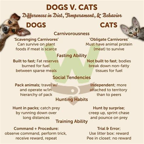 difference between cats and dogs 17 best images about cats vs dogs cats dogs on tabby cats cats and posts