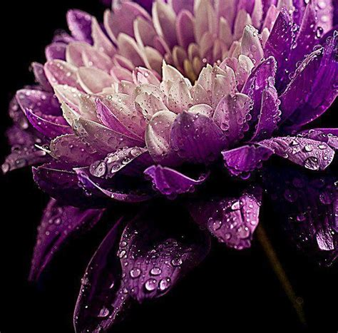 types of purple purple flower all types of flowers pinterest