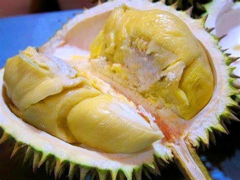 Bibit Durian Bawor Murah new wa 0812 8560 4125 jual bibit durian pendek