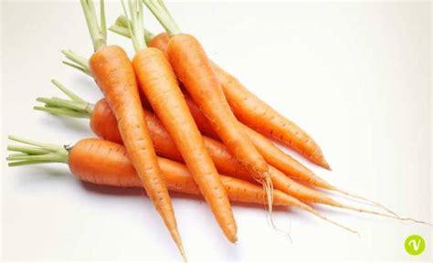 carote propriet 224 valori nutrizionali benefici e