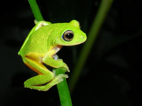 colorful frog colorful hibians wallpapers gallery