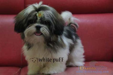 Jual Jual Anjing Maltese Kaskus pasang iklan promosi gratis kaskus iklan jual beli fauna