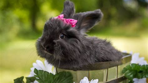 cute rabbit hd wallpaper cute rabbit hd wallpapers beautiful rabbits hd pictures