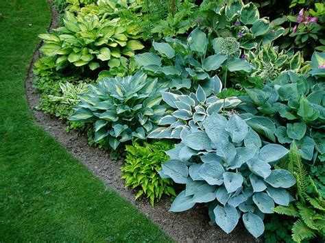 310 best images about hostas shade loving plants ground covers on pinterest shade garden