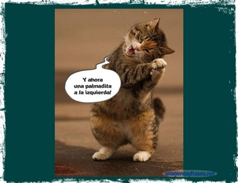 imagenes chistosos de gatos imagenes chistosas de gatos con frases auto design tech