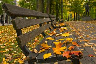 Leaf Chair Swing Autumn Leaves Park Bench Autumn Beautiful Nature