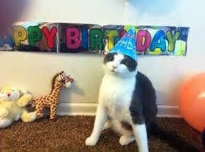 10 best images about quot happy birthday quot cats on pinterest