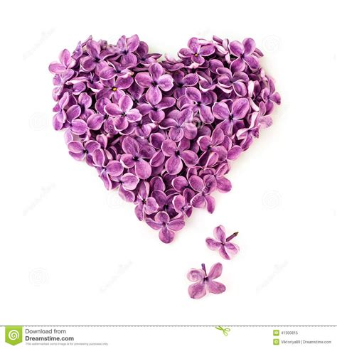 lilac flowers in shape of heart stock photo image 41300815