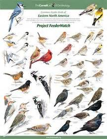 1000 images about birding in ontario s southwest on