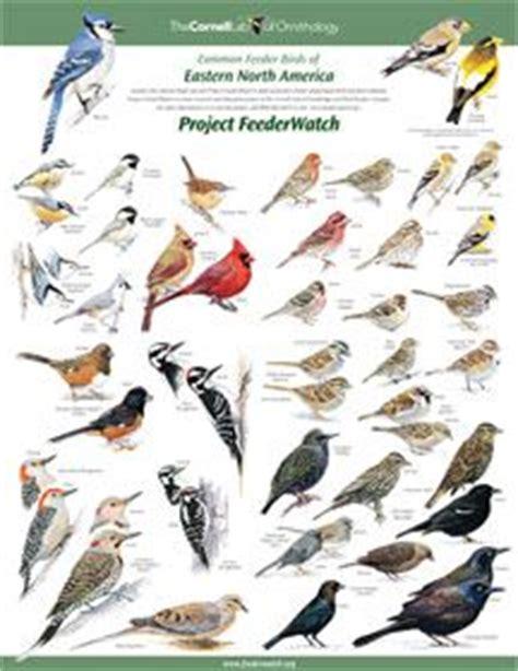 birding in ontario's southwest on pinterest | 33 pins