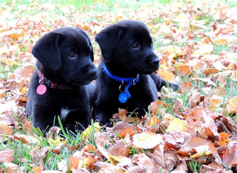 fall puppies fall puppies by gardner48197 photo weather underground