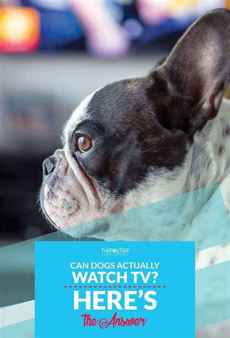 can dogs tv can dogs tv and what exactly do they see