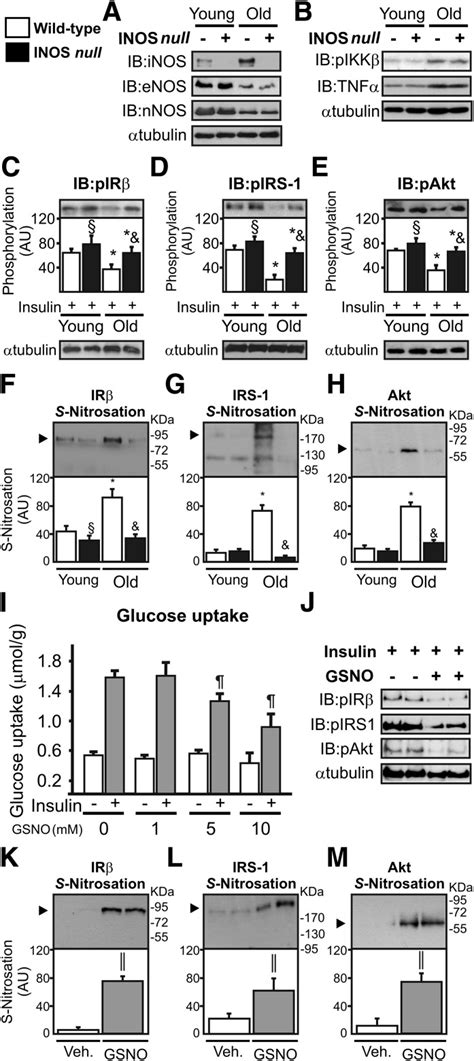 Insulin signaling and S-nitrosation of IR, IRS-1, and Akt