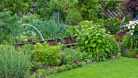 gardening picture floralinq gardens