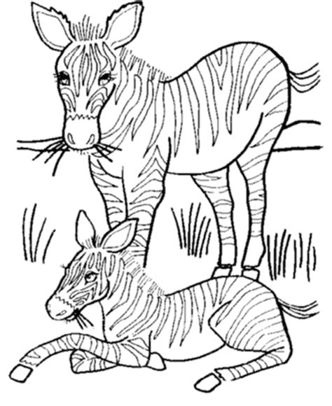 baby zebra coloring page baby zebra coloring pages coloring home