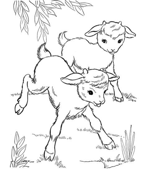 coloring pages of animals and their disegno di capretti da colorare disegno di capre con