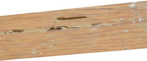 Hardwood Floor Termite Damage by Termite Damage Pictures Wood Flooring