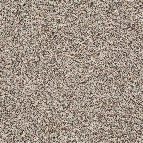shaw rug company shaw floors treat me style no e0681