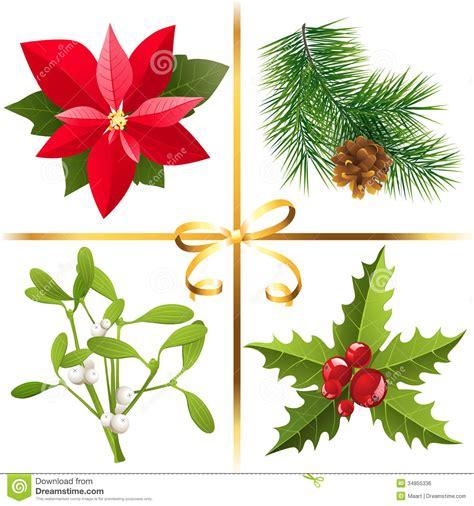 christmas plants christmas plants royalty free stock image image 34855336