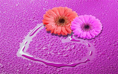 Wallpaper Flower Love Hd   love flowers hd wallpapers