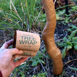 winter tree wrap wrapping up for winter gardening