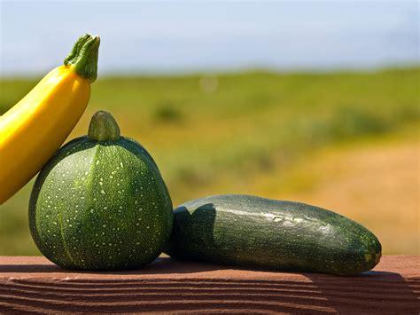 Schädlinge An Pflanzen 3093 by Zucchini Krankheiten 187 Sch 228 Dlinge Bek 228 Mpfen Vorbeugen