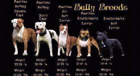 TOP 12 BANNED DOG BREEDS   Page 4 of 12   The Bully Breeds