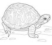 Alligator Snapping Turtle Coloring Page Supercoloring Com Snapping Turtle Coloring Pages
