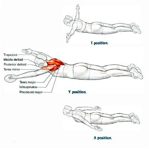 dryland exercises for swimmers