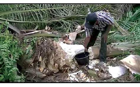 potensi batang sawit buat gula merah
