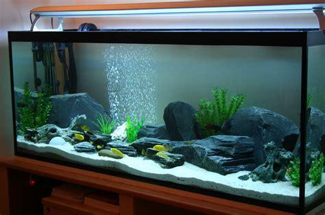 Best Plants For Tropical Aquarium - cichlids com tank examples all setup