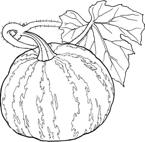 pumpkin coloring pages for sunday school 500 best food drink and cooking coloring pages images on