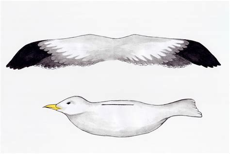 How To Make Seagulls Out Of Paper - the golden adventures of free printable