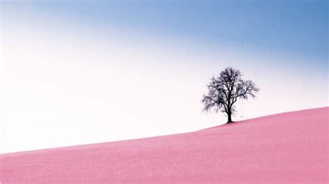 wallpaper pink hill lonely tree sky wallpapermaiden