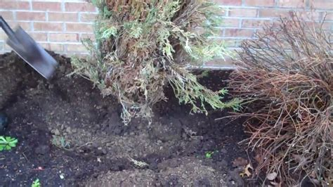 how to a to and outside how to remove a shrub