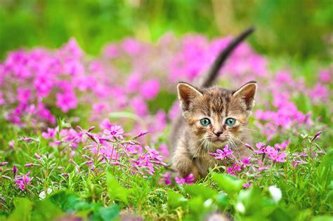 Blumen Gegen Katzen 2824 blumen gegen katzen pflanzen gegen katzen im garten